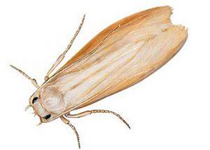 solutions pour éliminer les mites